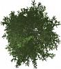 Gute Baum-Aufsichten als Staffage?-baum_aufsicht_14.png